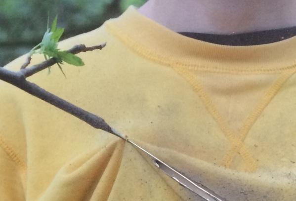 Potential Pin detail 2